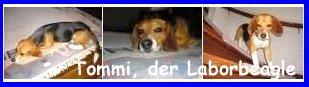 Tommi.zittauer.de - Das neue Leben eines Laborhundes